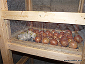 UK Homesteading - Uk Homesteaders - UK Self Sufficiency